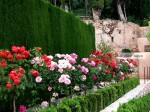 Generalife Roses Vignette Photo © ALICE JOYCE