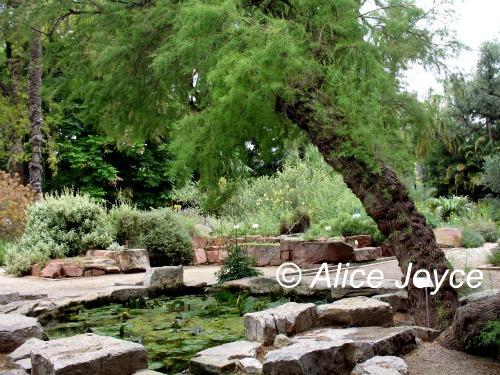 Valencia Spain Botanic Garden 171 Alice S Garden Travel Buzz