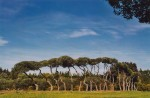 Marc Nucera .. 'Listening To Trees'
