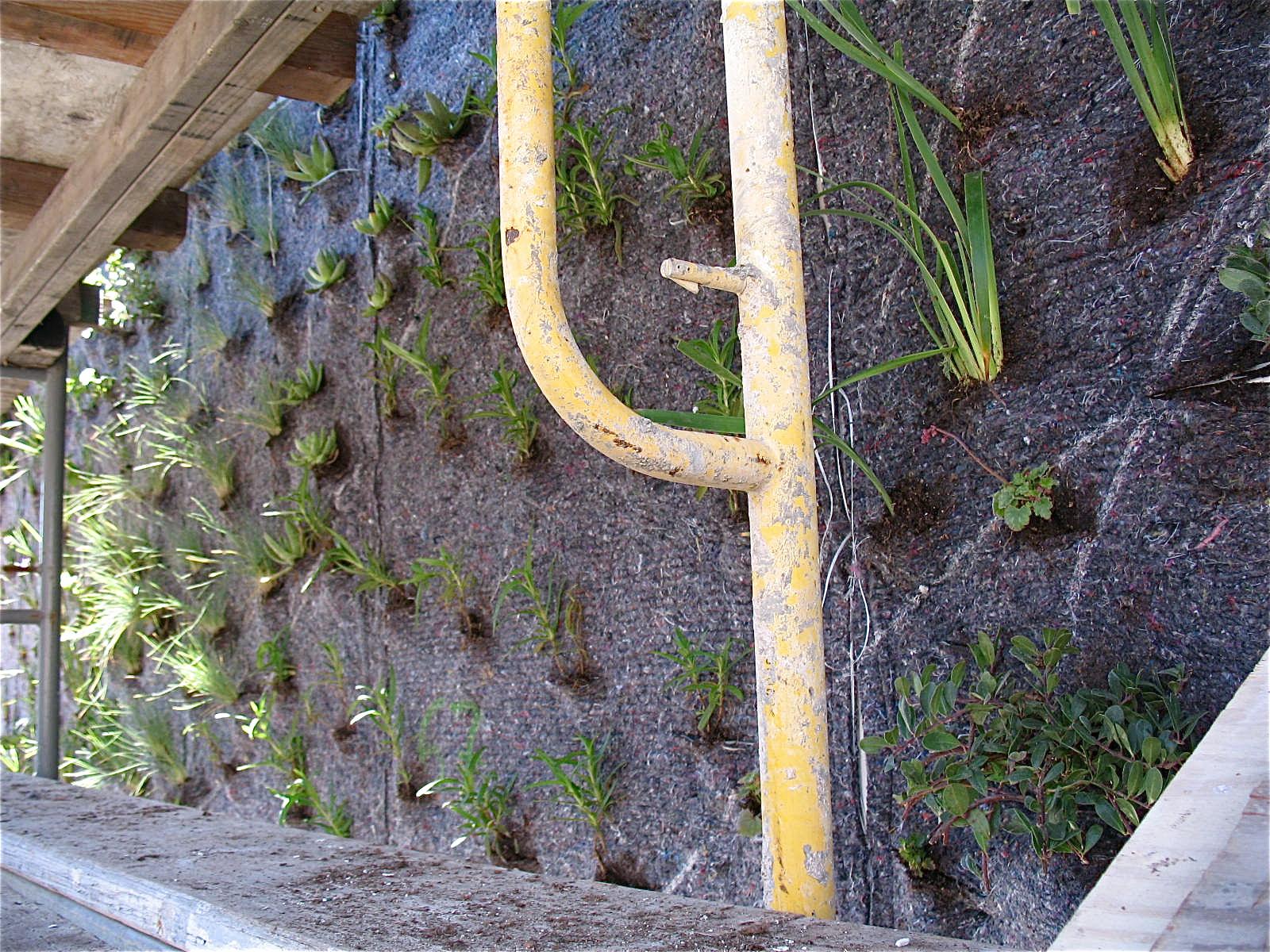 Patrick Blanc Vertical Garden Drew School San Francisco