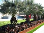 Resnick Pavilion Irwin Palm Garden Photo © Alice Joyce