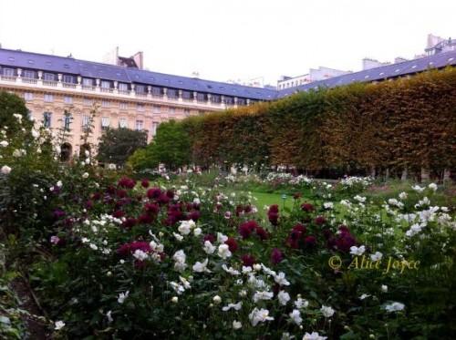 Tuileries roses © Alice Joyce