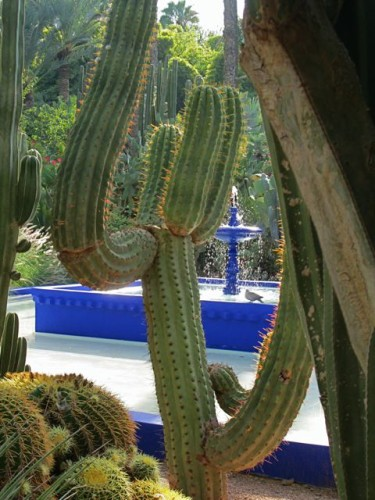 Jardin Majorelle Central Pool & Fountain © Alice Joyce